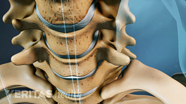 Anterior view of the cervical spine.