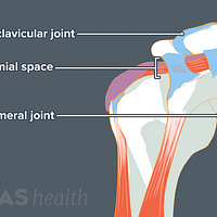 Illustration of shoulder anatomy including the AC joint, glenohumeral joint, and subacromial space