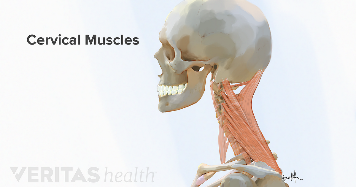 Forward Head Postures Effect On Neck Muscles