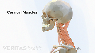 Neck Pain Causes Video