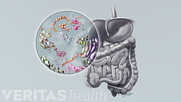 Illustrated enlargement of the gut microbiome from the stomach