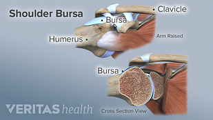 illustration of shoulder bursa