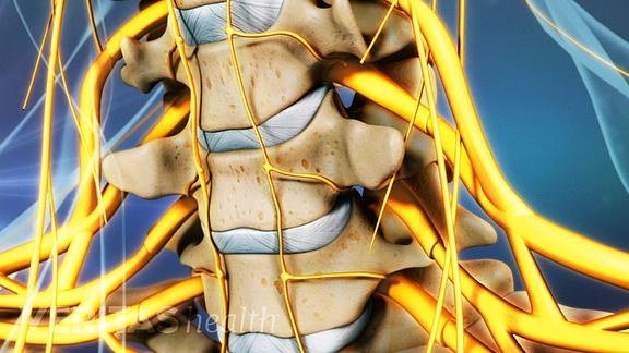 Anterior view of cervical vertebrae