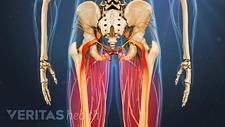 Posterior view degenerative spondylolilsthesis in the legs.