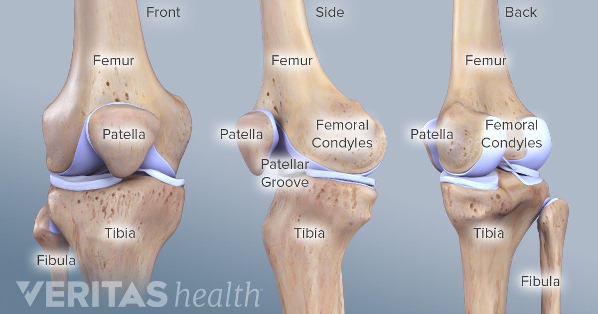 Anatomy of the knee meniscus