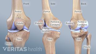 Anterior, profile, posterior views of the knee labeling the femur, patella, tibia.