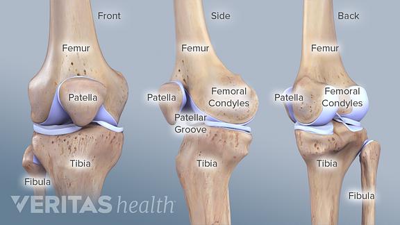 Skeletal And Muscular Diagram Of Knee Wiring Diagram For Light