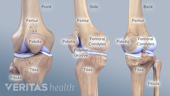 bones of the knee