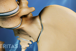 The sacroiliac joint connects the sacrum with the pelvis. It moves the forces of the upper body to the pelvis and legs.