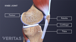 illustration of the knee anatomy from a lateral view