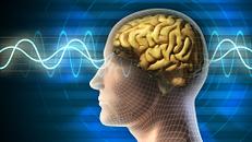 How Opioids Work in the Brain