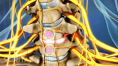 All about the C6-C7 Spinal Segment in the Neck