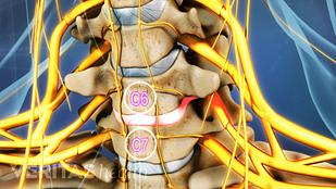 C6-C7 Spinal Segment
