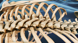 Posterior view of the spine.