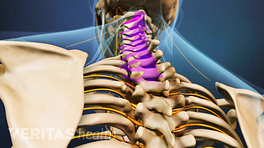 Posterior view of the upper body highlighting the cervical spine.