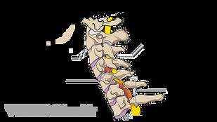 Medical illustration of common problems affecting the cervical spine