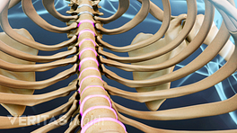 Medical illustration showing the spinal column from inside the rib cage