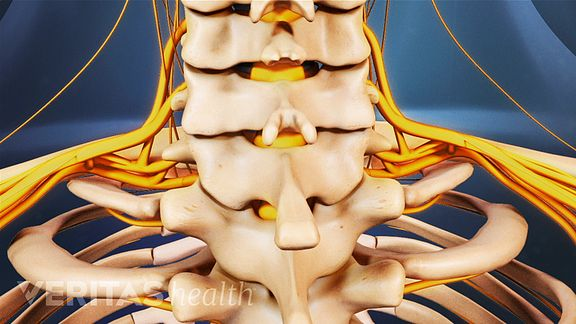 vertebrae of the cervical spine