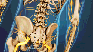 Lower Right Back Pain Tissues Spinal Structures