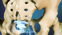 Posterior view of the pelvis highlighting the coccyx.