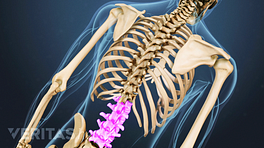 Posterior view of the upper body highlighting the lumbar spine.