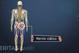 Anatomia del nervcio ciatico