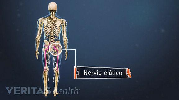 en que parte del cuerpo tenemos la pelvis