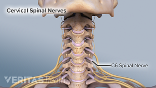 Illustration of the c5-c6 spinal motion segment (vertebrae and nerve root)