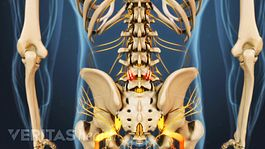 Lower half of a human skeleton with the sciatica nerve highlighted