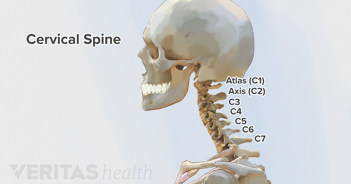 cervical spine anatomy and neck pain rh spine health com