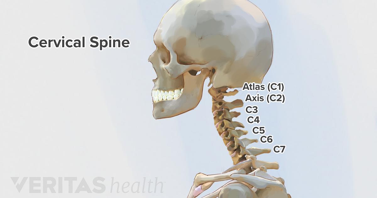 cervical spine anatomy Spine Diagram Bones