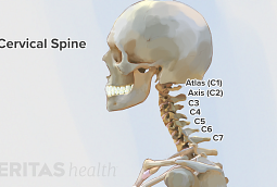 The seven cervical vertebrae in the cervical spine are typically very durable and injury resistant.