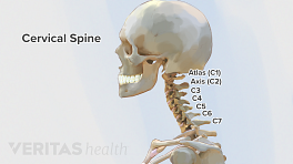 Medical illustration with labeled vertebrae of an adult cervical spine