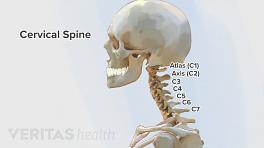 Illustration of the vertebrae in the cervical spine