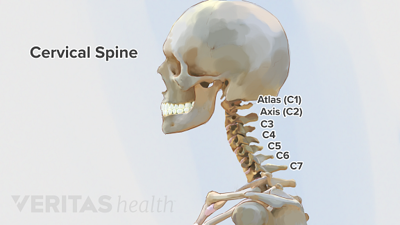cervical spine (vertebrae)