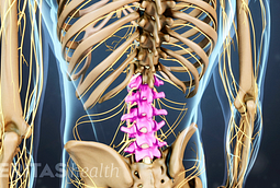 Animated video still of the vertebrae in the lumbar spine