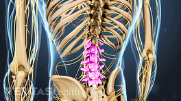 Posterior view of the back highlighting the lumbar spine