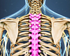 Posterior view of the upper body highlighting the thoracic spine.