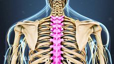 Spine Anatomy Overview Video