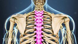 Spine Anatomy Video