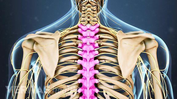 The thoracic spine, or upper back, is comprised of twelve vertebrae.