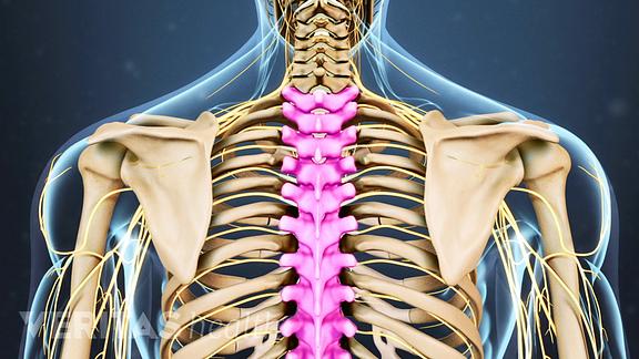 thoracic vertebrae?u=at8tiu&use=idsla&k=c thoracic spine anatomy and upper back pain