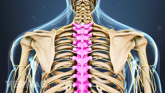 Animated video still highlighting the thoracic vertebrae