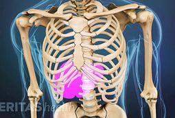 Lower Right Back Pain Internal Organs