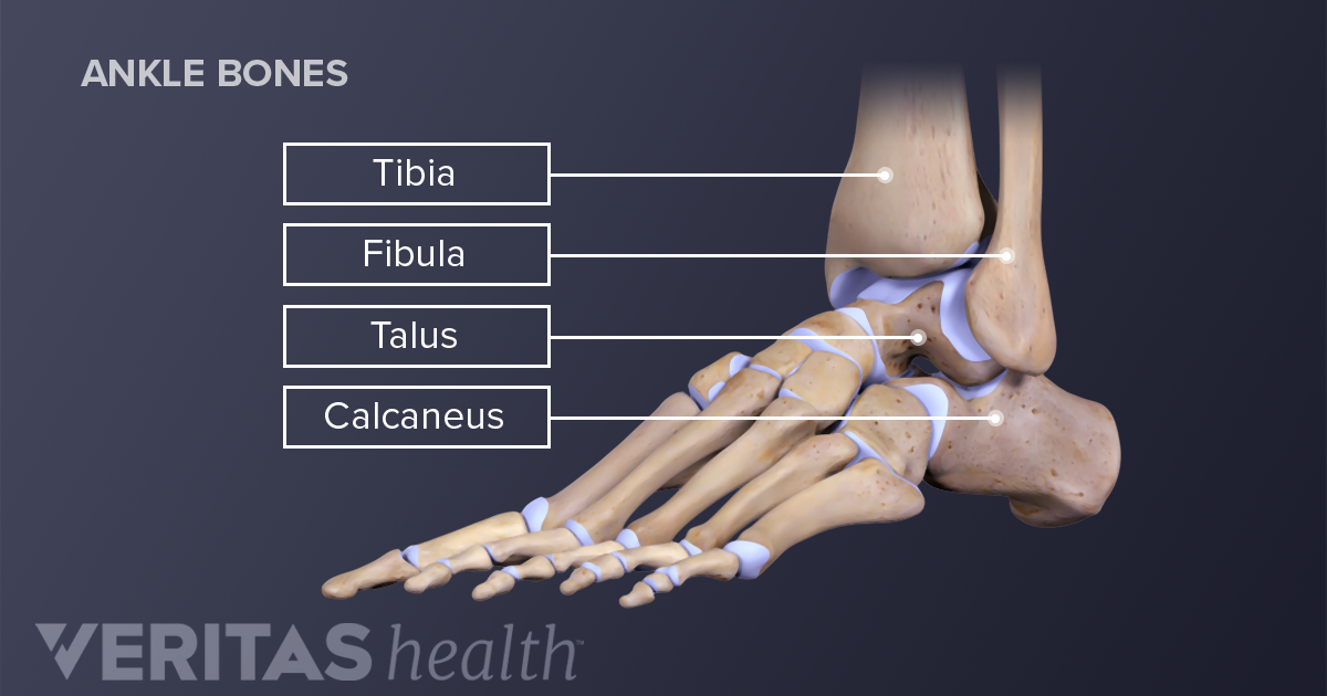 Ankle Joint Anatomy and Osteoarthritis | Arthritis-Health