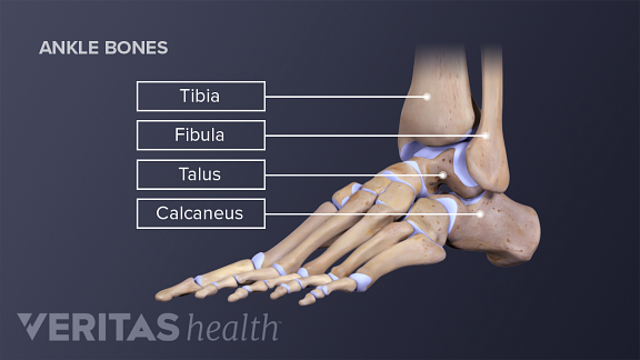 Ankle Joint Anatomy and Osteoarthritis