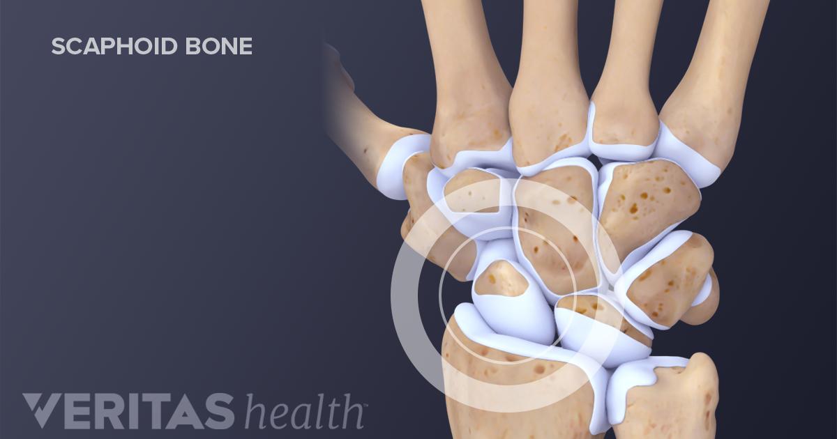 Guide To Wrist Anatomy