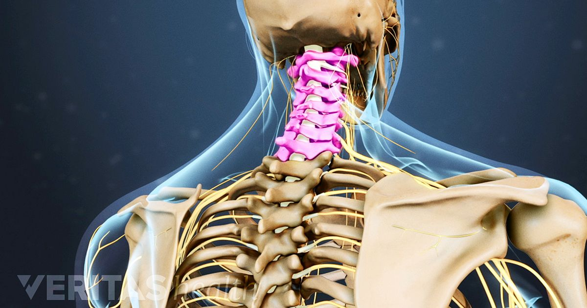 thoracic spine anatomy and upper back pain, Human Body