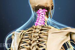 cervical herniated disc symptoms and treatment options, Human Body