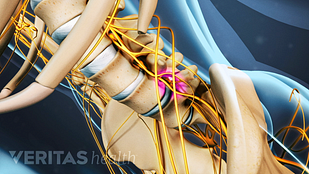 Animated video still of the sciatic nerve roots exiting at the foramen in the lumbar spine